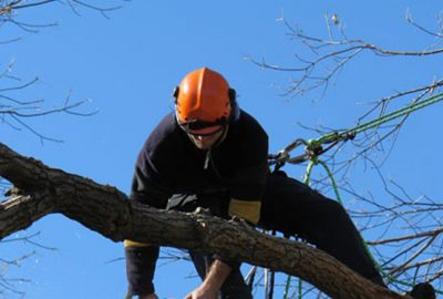 Rizikové kácení stromů Morava